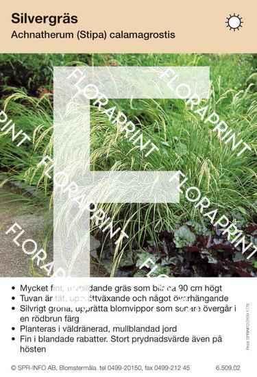 Achnaterum (Stipa) calamagrostis
