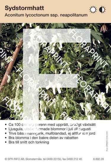 Aconitum lycoctonum (fd lamarckii) ssp neapolitanum