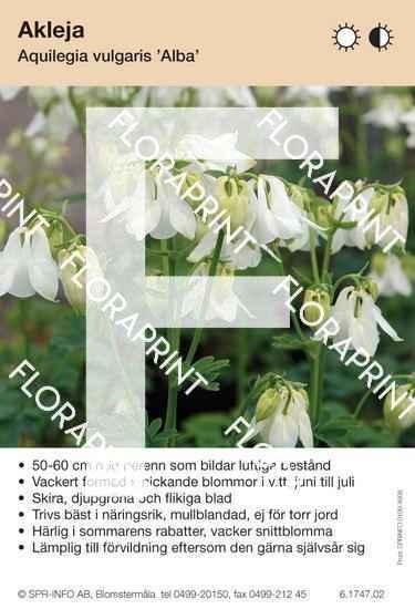 Aquilegia vulgaris Alba