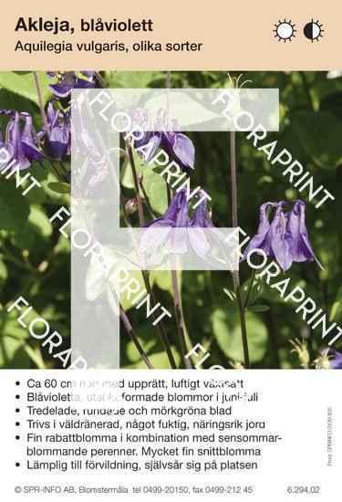 Aquilegia vulgaris (blåviolett)