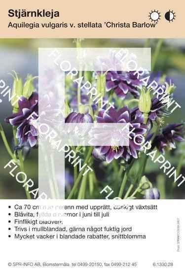Aquilegia vulgaris Christa Barlow