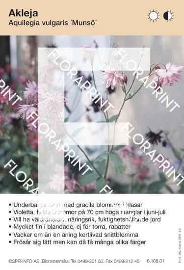 Aquilegia vulgaris Munsö