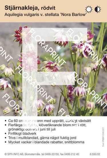 Aquilegia vulgaris Nora Barlow