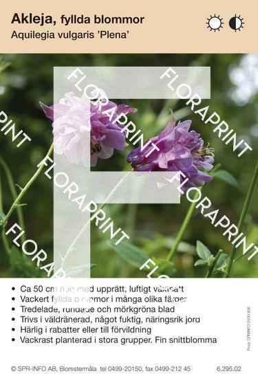 Aquilegia vulgaris Plena