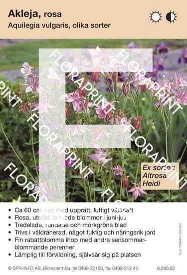 Aquilegia vulgaris (rosa) sorter.