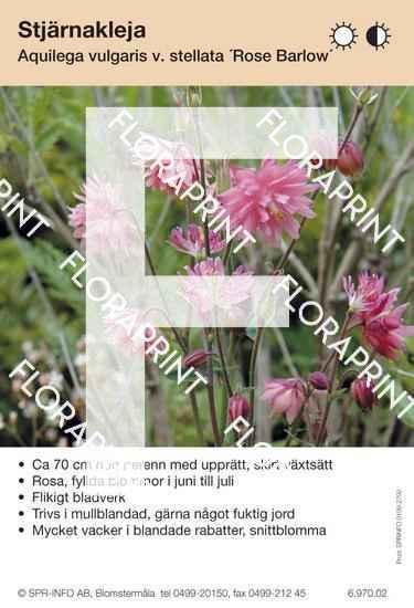 Aquilegia vulgaris Rose Barlow