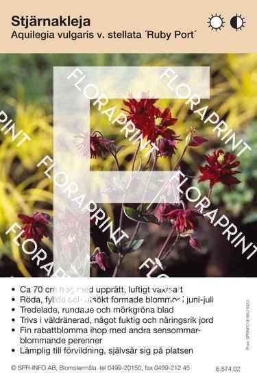 Aquilegia vulgaris Ruby Port
