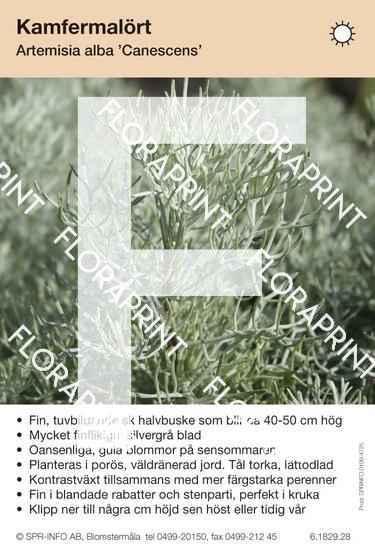 Artemisia alba Canescens