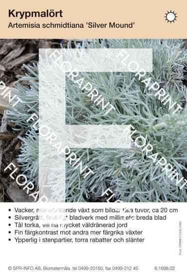Artemisia schmidtiana Silver Mound