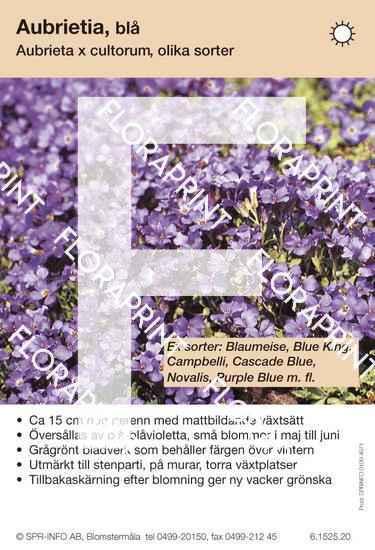 Aubrieta cultorum allm blå (sorter)