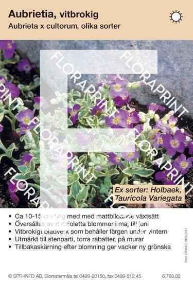 Aubrieta cultorum allm vitbrokig (sorter:)