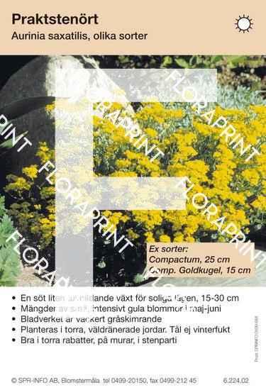 Aurinia (fd Alyssum) saxatilis (sorter:)
