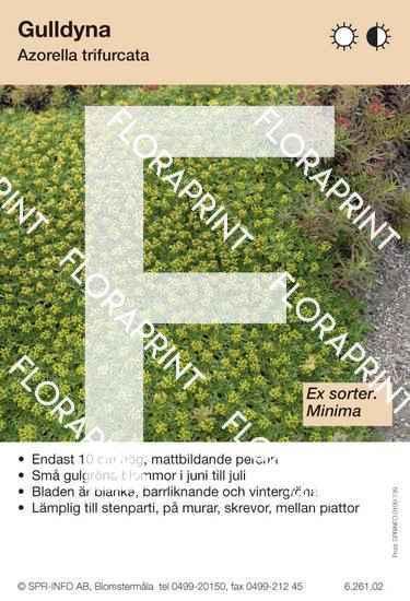 Azorella trifurcata (sorter:)
