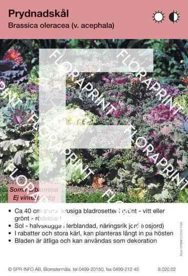 Brassica oleracea (v. acephala)