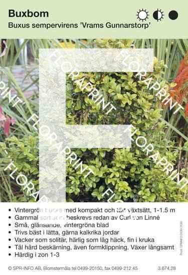 Buxus sempervirens Vrams Gunnarstorp