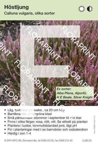 Calluna vulgaris (allmän) sorter