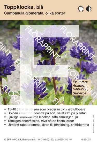 Campanula glomerata (mörkviolett) sorter: