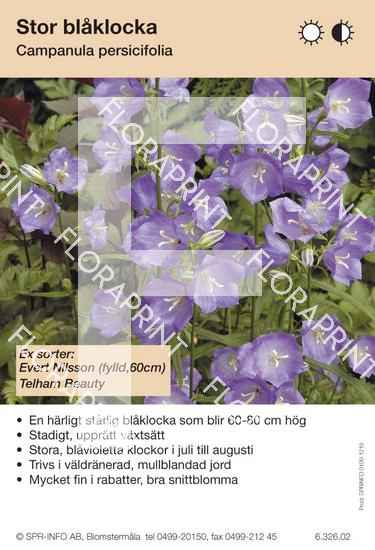 Campanula persicifolia (blå) sorter: