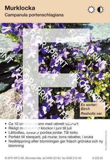 Campanula portenschlagiana (sorter:)