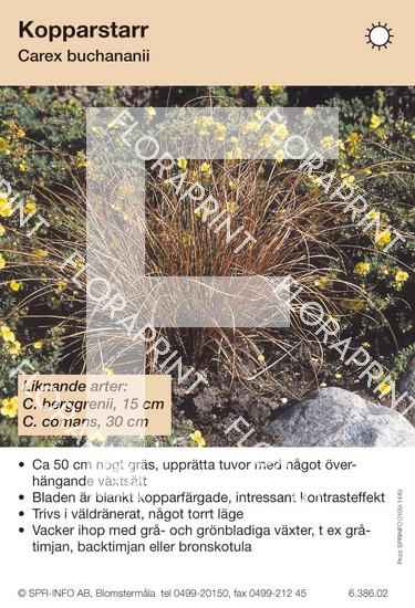 Carex buchananii (likn arter:)