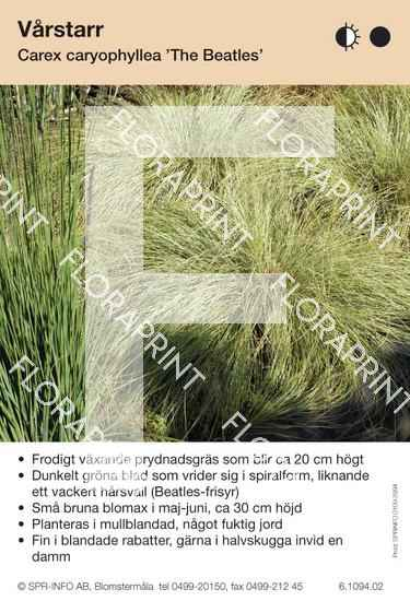 Carex caryophyllus The Beatles