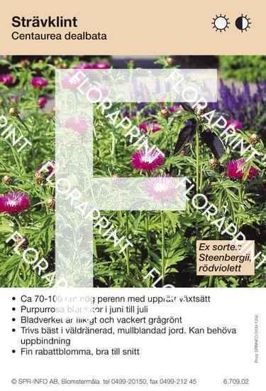 Centaurea dealbata (sorter:)
