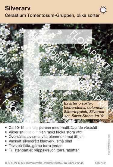 Cerastium tomentosum (sorter:)