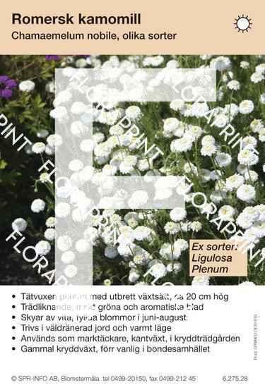 Chamaemelium nobile (sorter:)