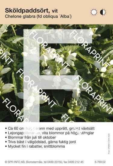 Chelone glabra (fd obliqua Alba)