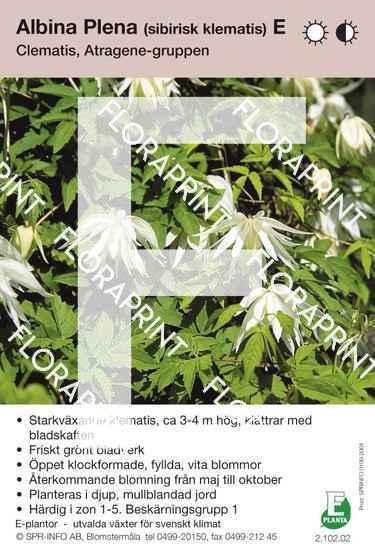 Clematis Albina Plena E
