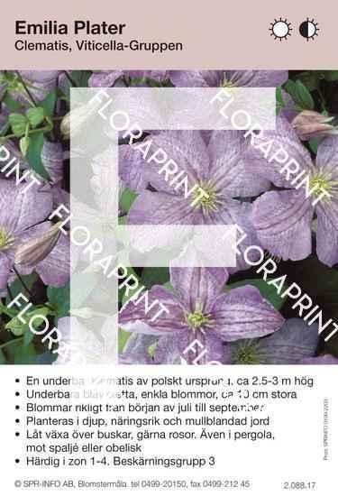 Clematis Emilia Plater