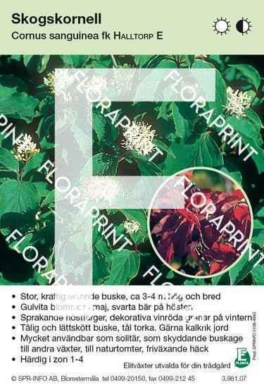 Cornus sanguinea Halltorp E