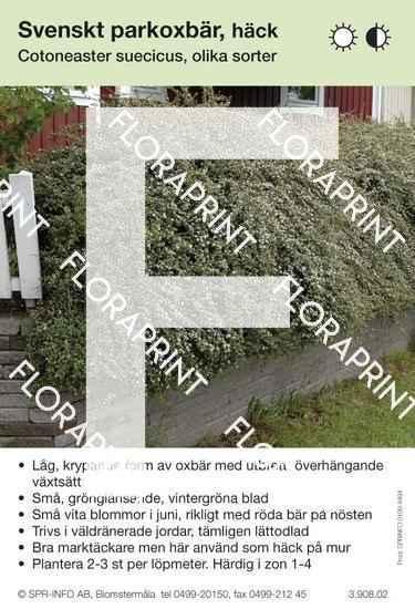 Cotoneaster suecicus allmän