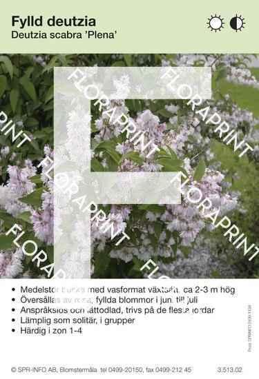 Deutzia scabra Plena (Flore Pleno)