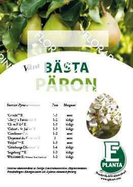 E-planta; Våra bästa päron