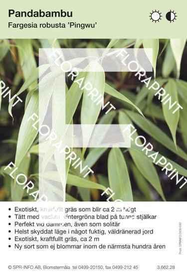 Fargesia robusta Pingwu