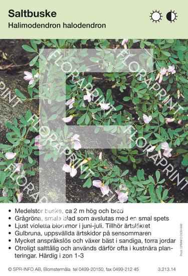 Halomidendron halodendron