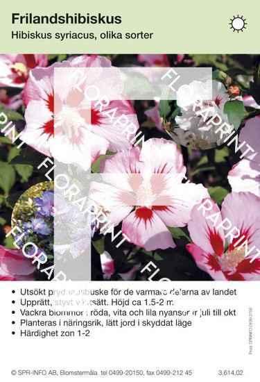 Hibiscus syriacus allmän blandade färger