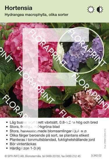 Hydrangea macrophylla blandade sorter och färger
