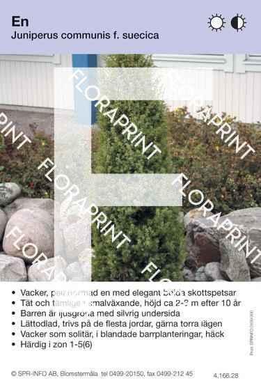 Juniperus com f. suecica
