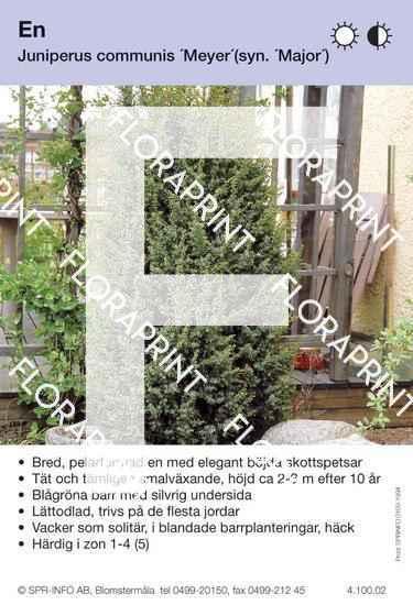 Juniperus com Meyer