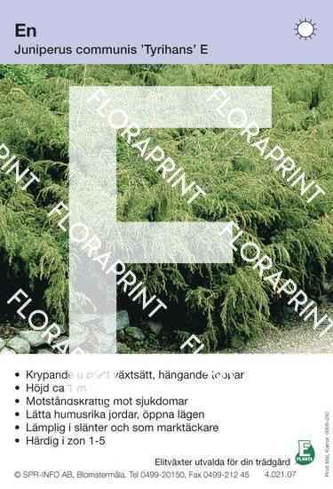 Juniperus com Tyrihans E