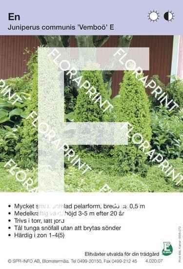 Juniperus com Vemboö E
