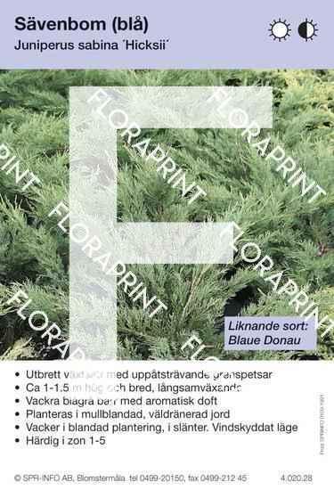 Juniperus sabina Hicksii