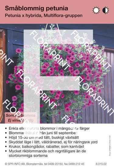 Petunia Multiflora-Grp
