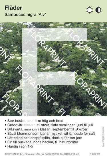 Sambucus nigra Alv