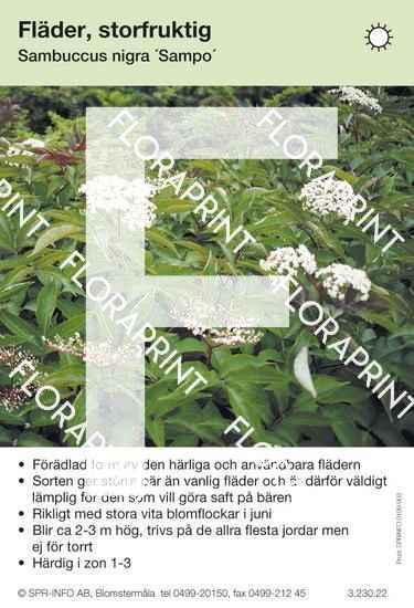 Sambucus nigra Sampo
