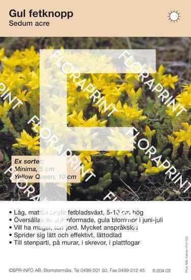 Sedum acre (sorter:)