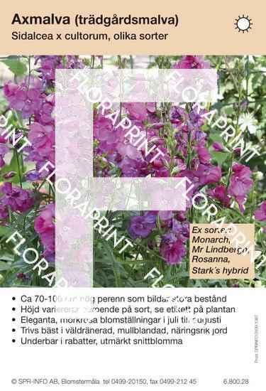 Sidalcea cultorum allm mörkrosa (sorter:)