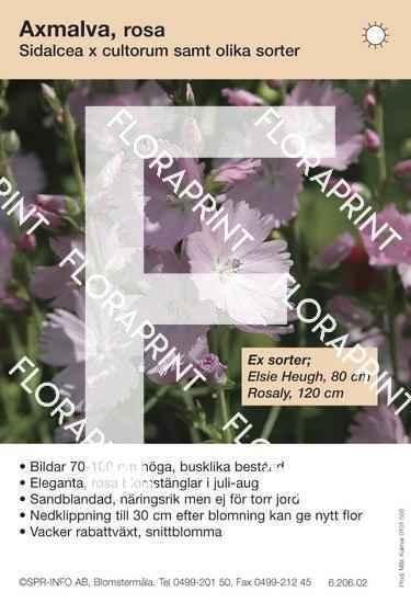 Sidalcea cultorum allm rosa (sorter:)